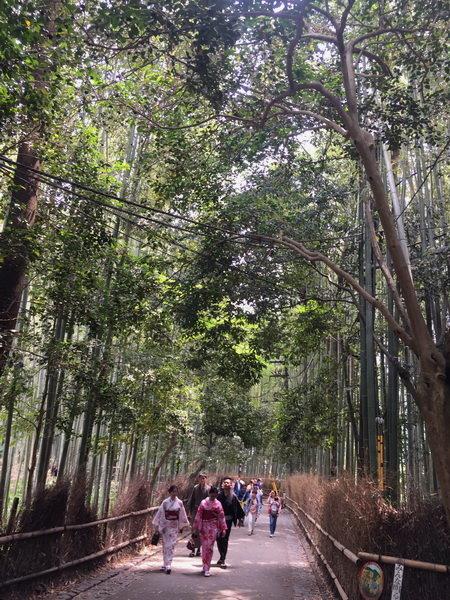 嵐山天龍寺:嵐山竹林19