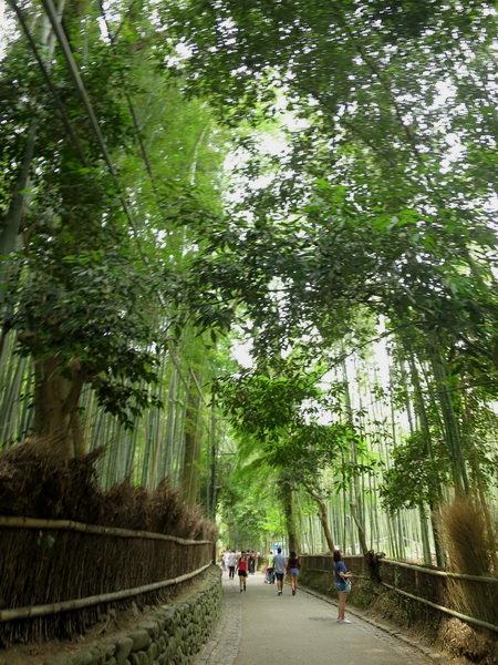 嵐山天龍寺:嵐山竹林11