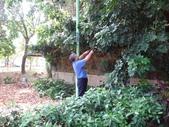 修剪樹籬:DSC09172.JPG