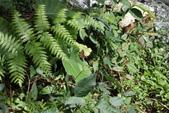 秋天雙溪的昆蟲:074A4763.JPG