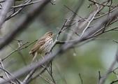 復旦-新天母公園的鳥兒:074A8138.jpg