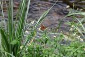 秋天雙溪的昆蟲:074A4786.JPG