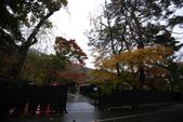 日本賞楓九天 Day5--東北-角館清晨與傍晚 :IMG_8564.JPG