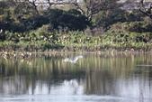 復旦大埤塘的鳥兒:074A7279.JPG
