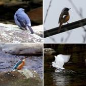雙溪秋天的鳥類:相簿封面