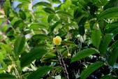 2017春天社區花兒與昆蟲:074A2314.JPG
