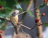 南港鳥兒:074A2382a.jpg