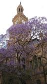 2017雪梨的藍花楹:10614雪梨市政府.jpg