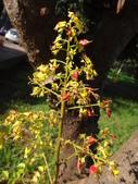 平鎮復興親子公園秋天的花草樹木:DSC06173.JPG