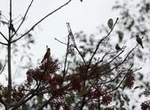 大雪山賞鳥和松鼠及猴王:074A7307.JPG