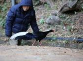 大雪山賞鳥和松鼠及猴王:074A7345不怕人.JPG