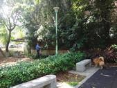 修剪樹籬:DSC09162.JPG