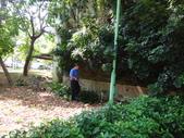 修剪樹籬:DSC09166.JPG