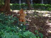 愛犬 Yuni 生活百態 (2015年10月) :DSC00676.JPG