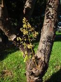 平鎮復興親子公園秋天的花草樹木:DSC06169.JPG