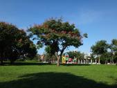 平鎮復興親子公園秋天的花草樹木:DSC05965.JPG