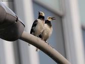 南港鳥兒:074A2405鳥夫妻.jpg
