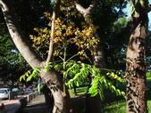 平鎮復興親子公園秋天的花草樹木:DSC06171.JPG