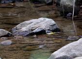 雙溪秋天的鳥類:074A5637灰鶺鴒.jpg