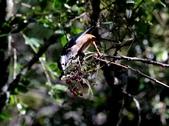冬至大雪山活潑的鳥兒與松鼠:074A6945a.jpg