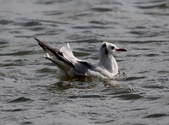 鰲鼓的候鳥與水鳥:N74A3107.JPG