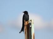 復旦大埤塘的鳥兒:074A7302.JPG