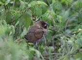 復旦-新天母公園的鳥兒:N74A3672.JPG