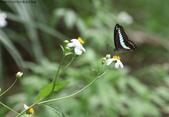 秋天雙溪的昆蟲:074A4791.JPG