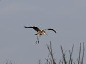 復旦社區冬天的鳥兒:074A7738a.jpg