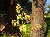 平鎮復興親子公園秋天的花草樹木:DSC06172.JPG