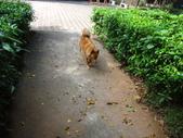 愛犬 Yuni 生活百態 (2015年10月) :DSC00759.JPG