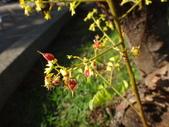 平鎮復興親子公園秋天的花草樹木:DSC06174.JPG