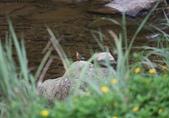 雙溪秋天的鳥類:074A5706.JPG