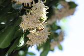 2017春天社區花兒與昆蟲:074A2342.JPG