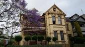 2017雪梨的藍花楹:10494.jpg