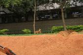 復旦-新天母公園:DSC04115.JPG