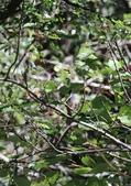 冬至大雪山活潑的鳥兒與松鼠:074A6934.JPG