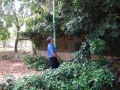 修剪樹籬:DSC09173.JPG