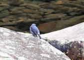 雙溪秋天的鳥類:074A5473a.jpg
