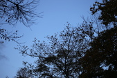 日本賞楓九天Day3--東北-十和田湖~燒山 :IMG_8105.JPG