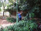 修剪樹籬:DSC09175.JPG