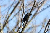 復旦大埤塘的鳥兒:074A7296.JPG