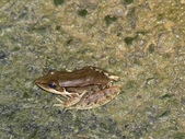 自然界之美一青蛙:image.jpg