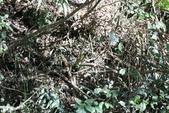 冬至大雪山活潑的鳥兒與松鼠:074A6970.JPG