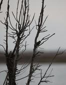 鰲鼓的候鳥與水鳥:074A8017.JPG