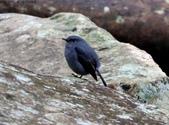 雙溪秋天的鳥類:074A5466a.jpg