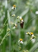秋天雙溪的昆蟲:074A4789.JPG
