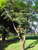 平鎮復興親子公園秋天的花草樹木:DSC06168.JPG