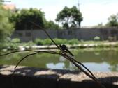 老友湖口別墅的生物:DSC07357.JPG
