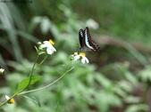 秋天雙溪的昆蟲:074A4790.JPG